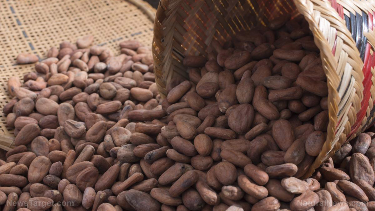 The best way to boost the health benefits of cocoa beans lies in how you roast them