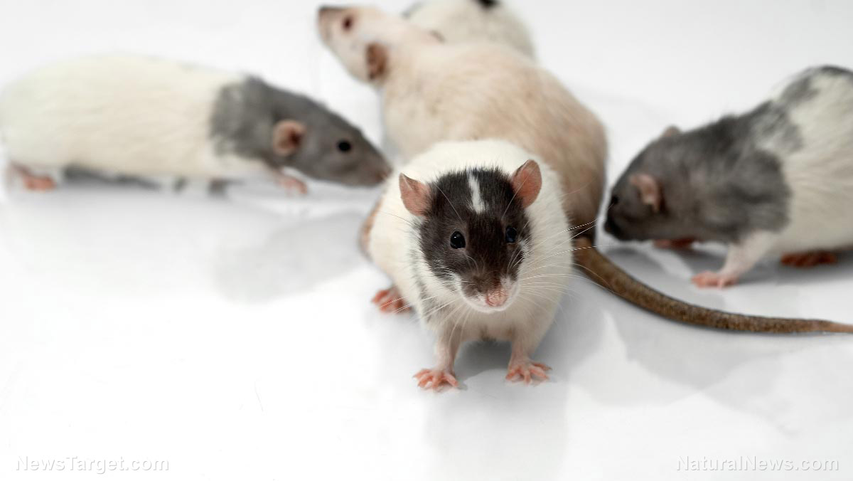 Ratting them out: Rats are better at detecting tuberculosis in children than standard tests