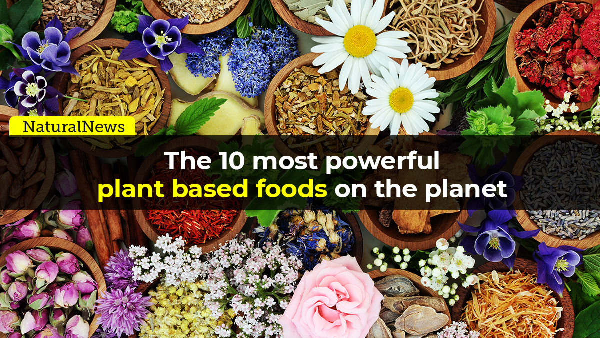 From the Health Ranger Store: The 10 most powerful plant-based foods on the planet