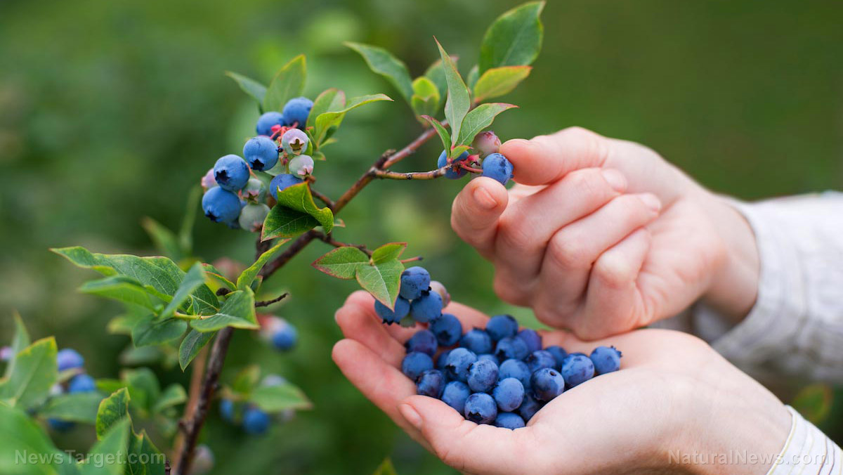 Comprehensive study confirms the cardioprotective effects of blueberries and strawberries