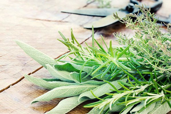 Herbs that Boost Memory
