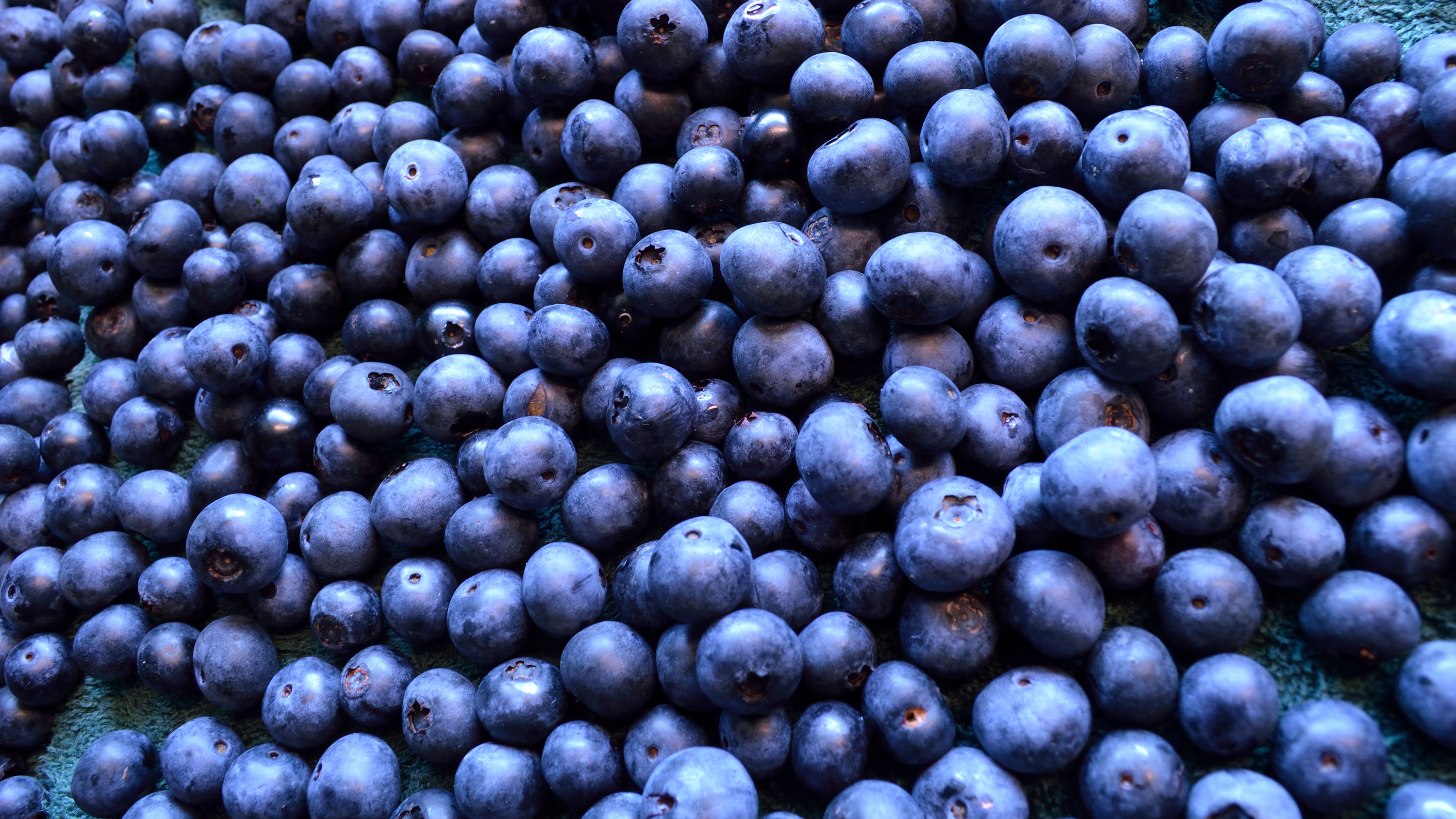 Fermented Blueberries May Restore Cognitive Function In Amnesia