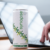 Synapse Launches Natural Cognitive Boost