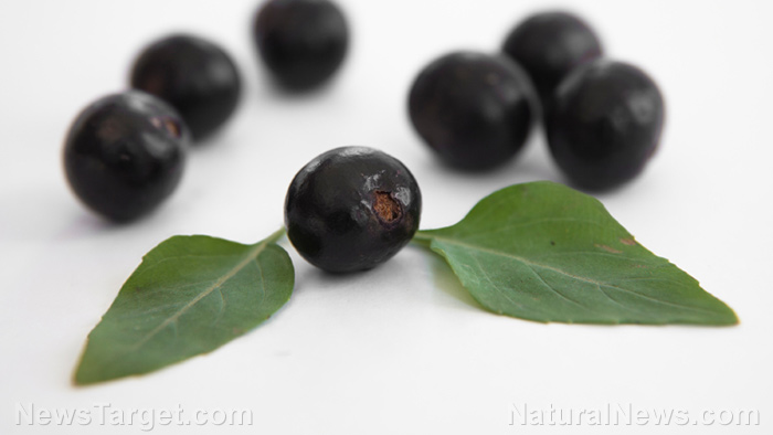 Acai found to prevent renovascular hypertension-related abnormalities