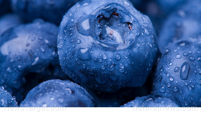Blueberries contain a specific substance that can prolong your life