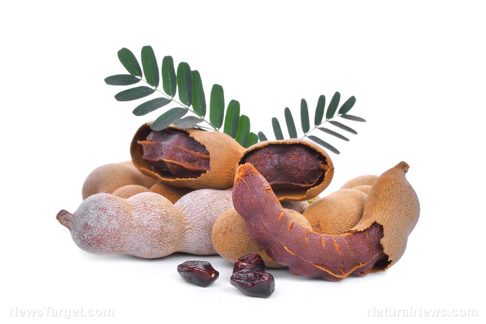 Tamarind found to remove dangerous fluoride deposits from bones
