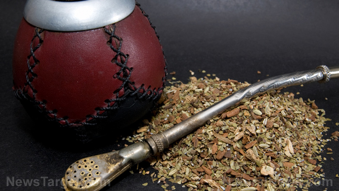 Better than coffee? Yerba mate is an herbal tea that keeps your mind strong AND helps you lose weight