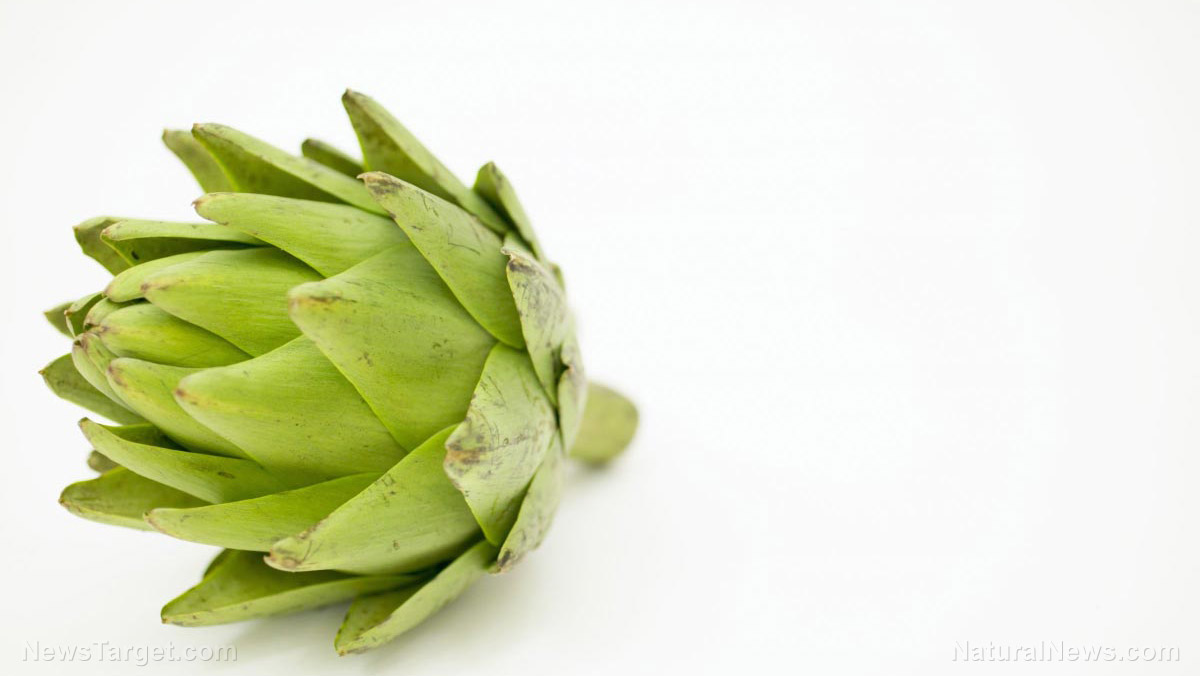 Artichokes reverse the effects of a high-fat diet, concludes study