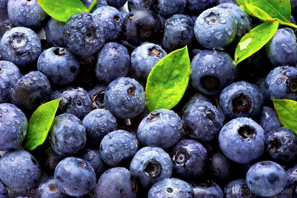 Blueberries are bursting with various antioxidants that reduce the risk of dementia