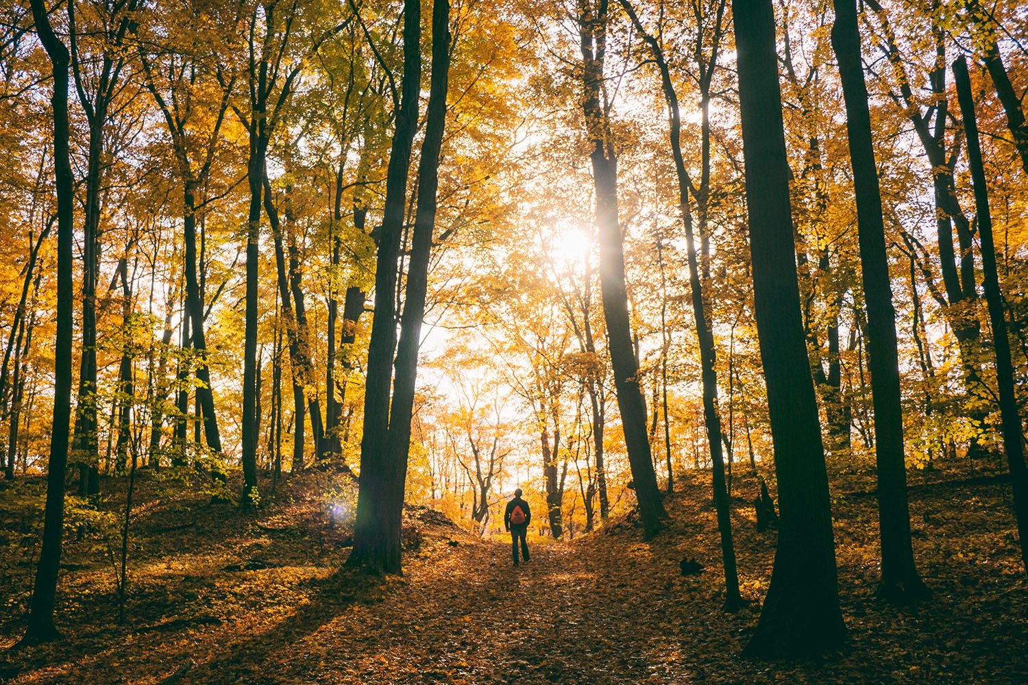 Science says that going for a hike is good for your brain