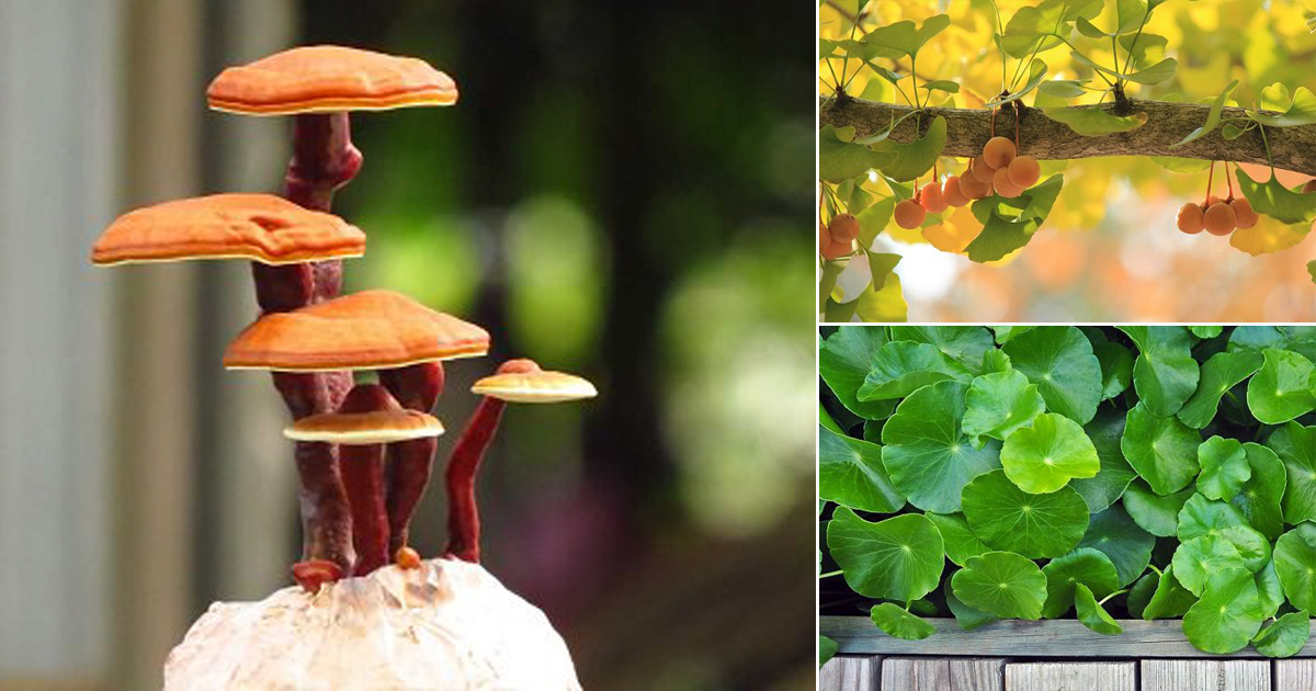 17 Proven Plants That Improve Memory & Concentration