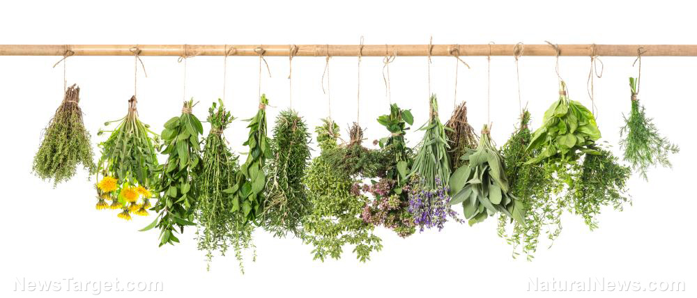 10 Medicinal herbs that every prepper needs when SHTF