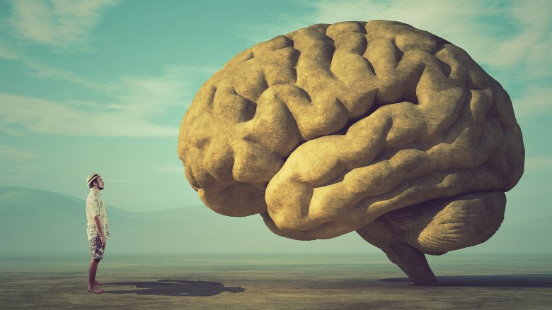 Facts about the human brain everyone gets wrong