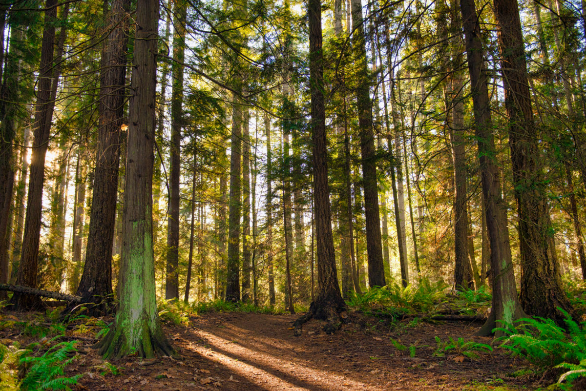 """How to turn your cottage walk into a stress-reducing """"forest bath"""""""