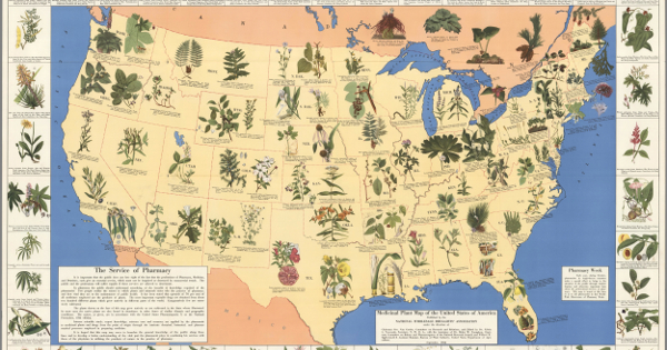 Amazing 1930's Pharmacist Map of 'Herbal Cures' Released to Public