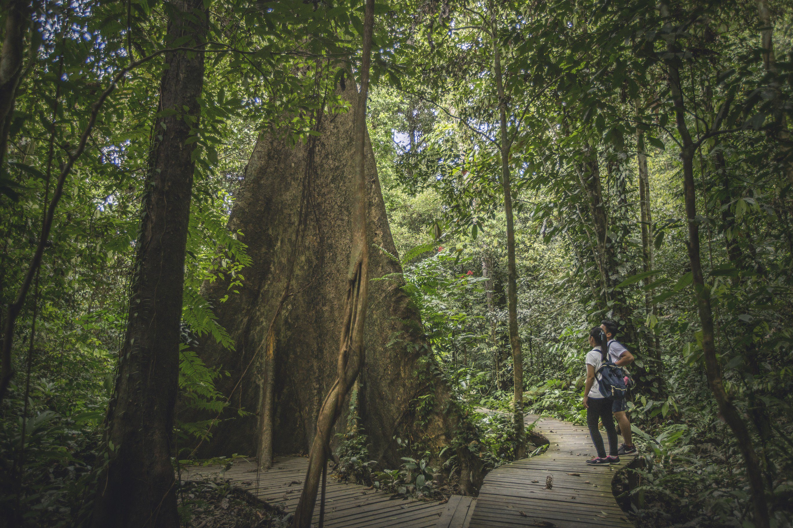 Nature therapy, such as forest bathing – mindfully walking through nature – can help to reprogram our overstimulated minds and bodies