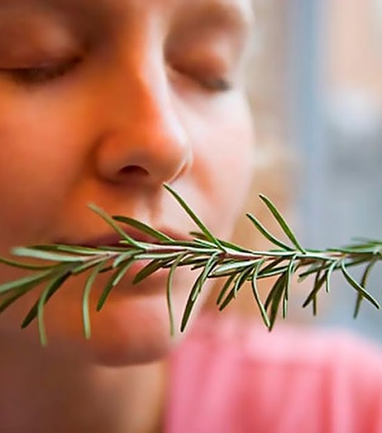Improve Memory + 9 Other Rosemary Benefits Backed by Science