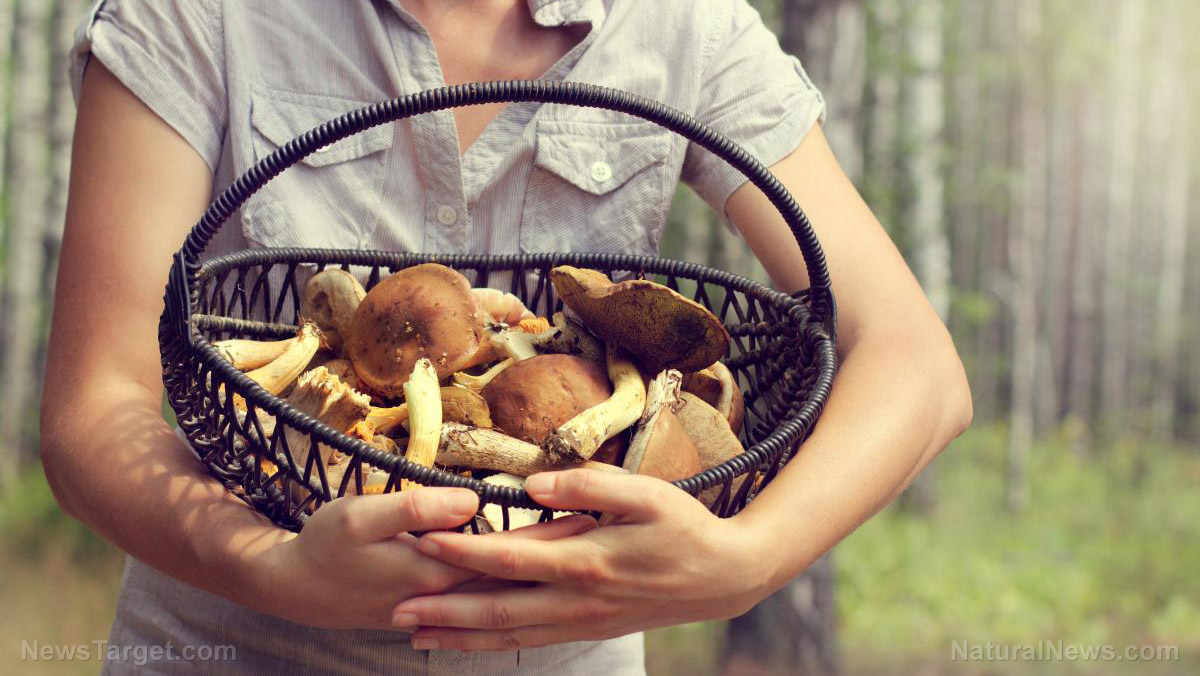 Nutrient powerhouse: 5 Health benefits you can gain from medicinal mushrooms