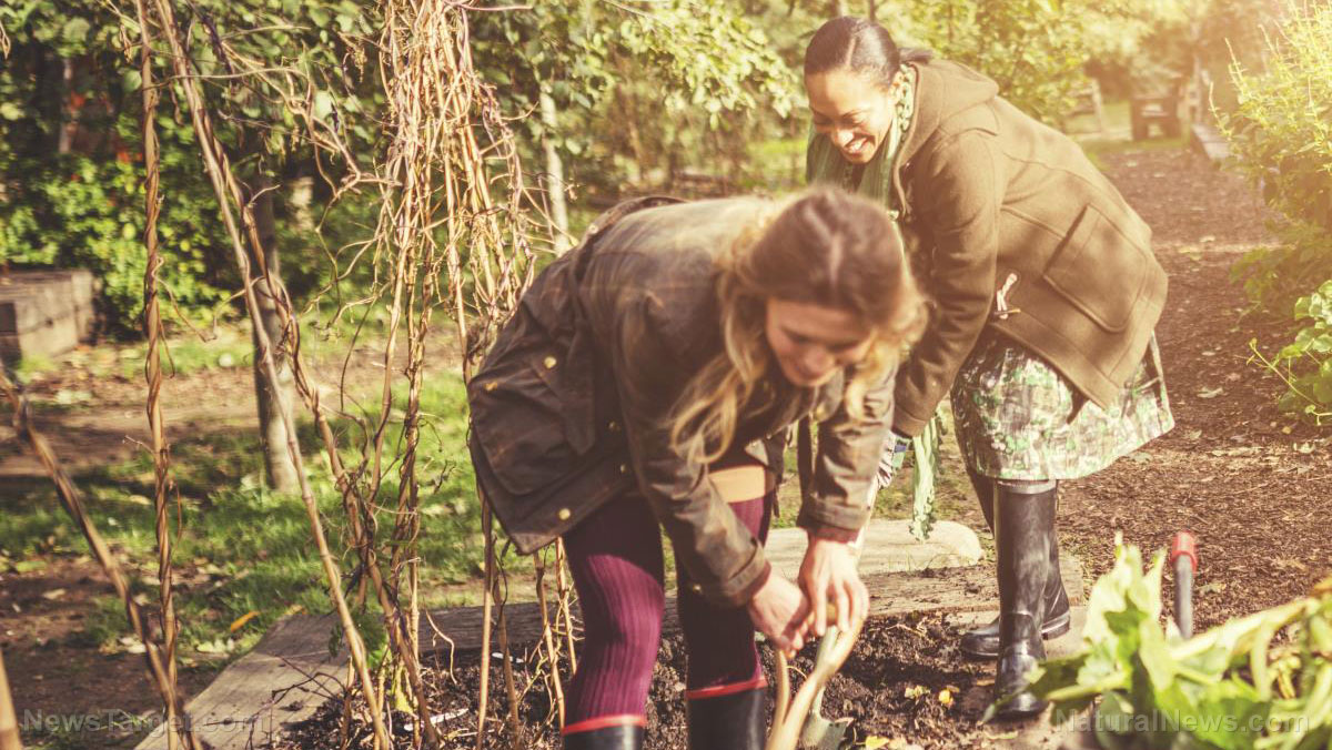 FARMacy: Gardening does wonders for your mood