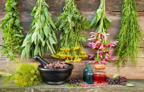 Natural Painkillers: Best Plants for Pain Relief ( Powerful Plants That Kill Pain Fast )