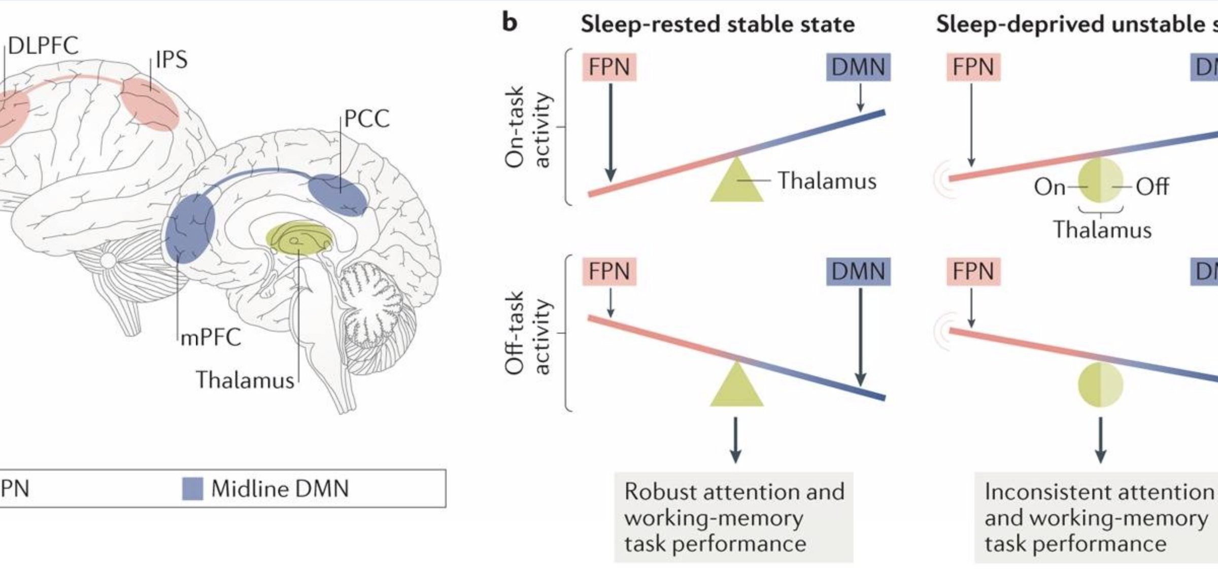 Sleep - A Complete Guide To REM Sleep and Sleep Stages