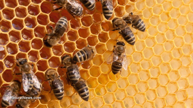 Bee smarts: Scientists discover the insects can do basic math