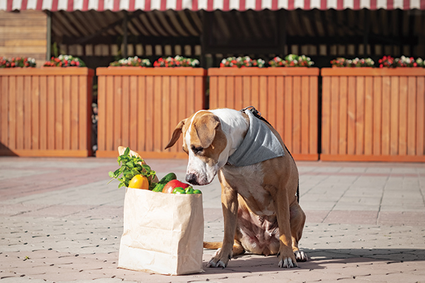 What Fruits and Vegetables Are Safe for Dogs?