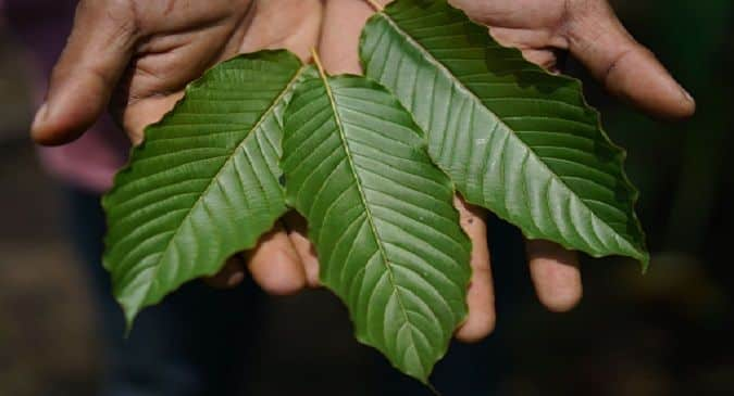 The Kratom controversy: Is it a friend or a foe?