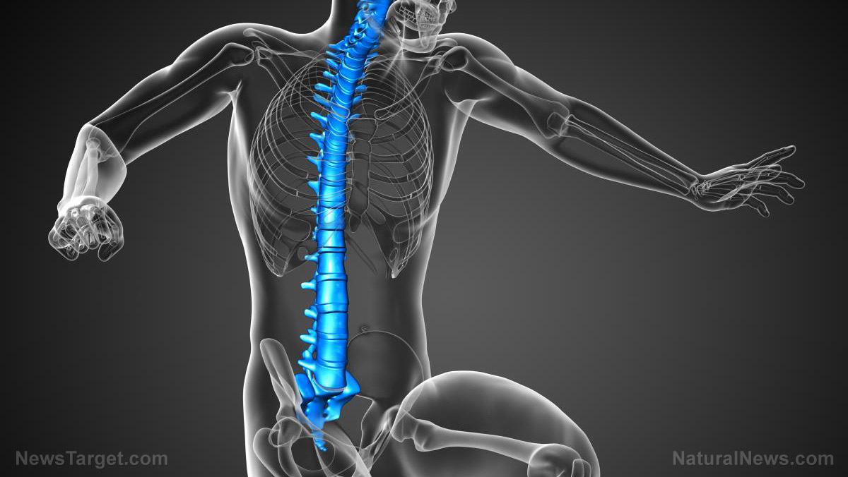 Researchers discover that the spinal cord works with the brain to control complex motor functions