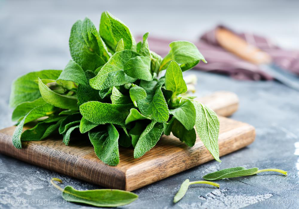 Improving oral and brain health: Antioxidant-rich sage has amazing health benefits