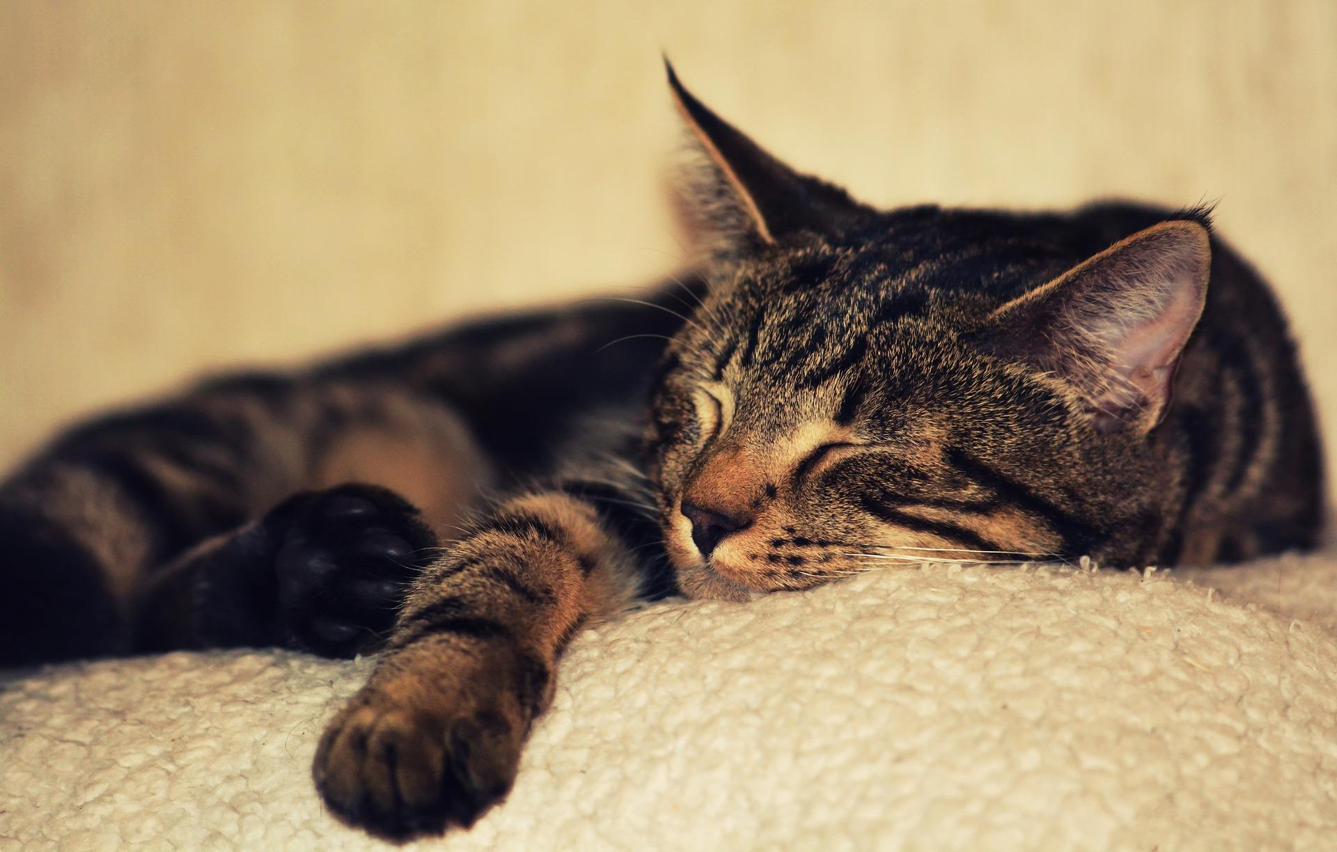 Should You Take That Cat Nap? The Sleep Link To Mental Health
