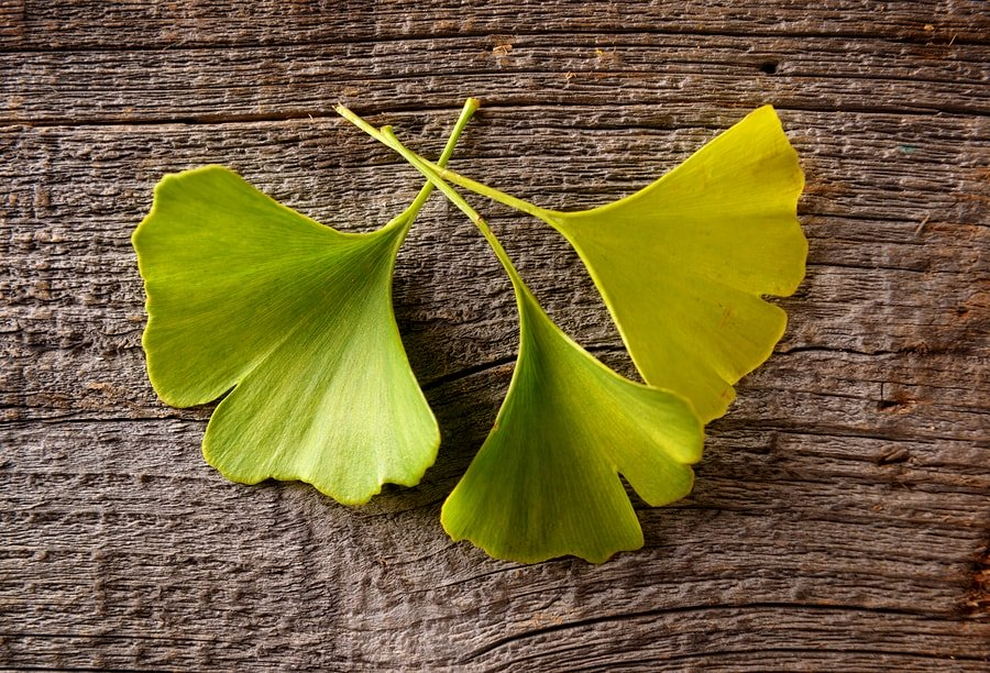 15 Ginkgo Biloba Benefits and Side Effects