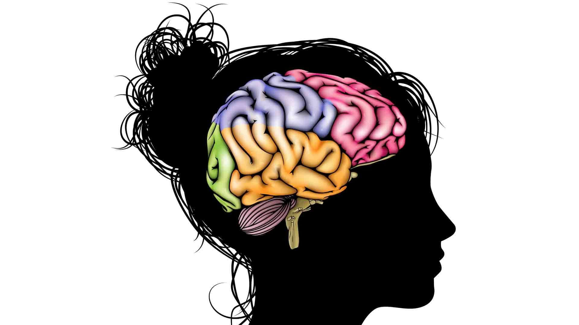 """Factors that May """"Grow"""" the Brain: Hope for Brain Injury?"""