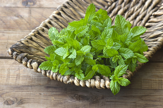 Spearmint confirmed to improve cognitive health: Study