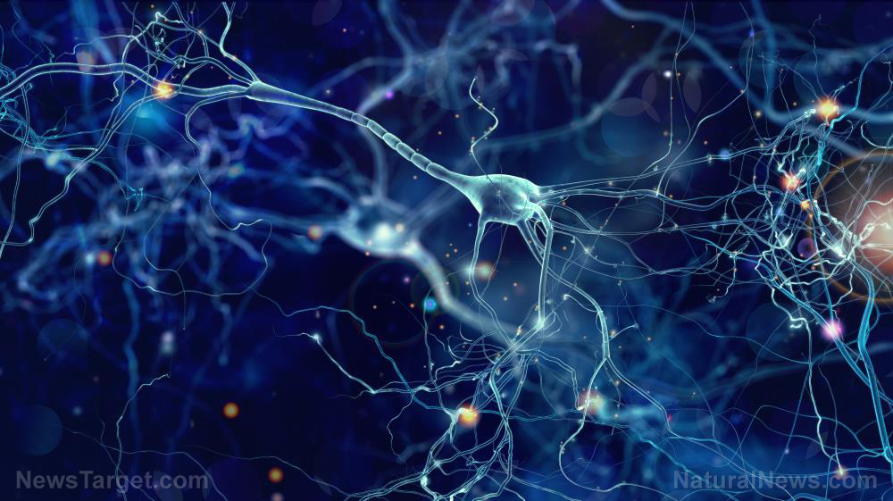 Naturally occurring molecule shows potential to treat patients with Parkinson's