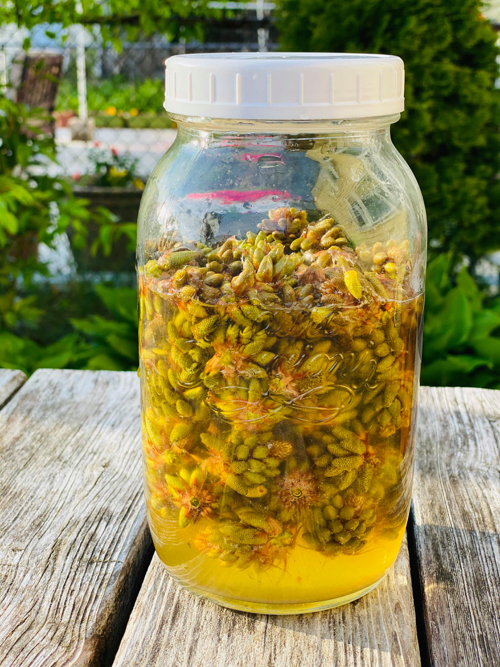 Pine Pollen Buds Fermented Syrup