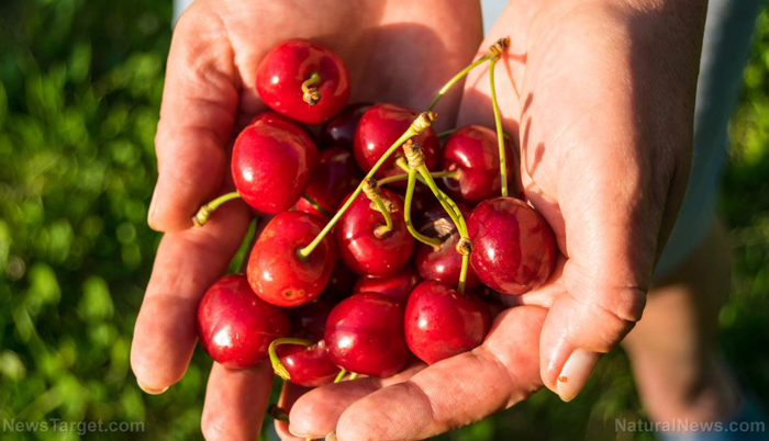 The Brain-Boosting Potential Of Tart Cherry Juice