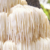 The Amazing Health Benefits of Lion's Mane Mushroom