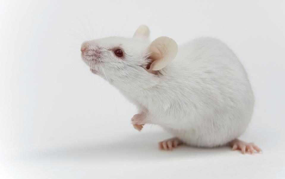 Scientists Just Discovered A Way To Treat Down Syndrome Prenatally — In Mice