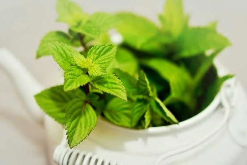 Mint Leaves: Rich in Vitamins, Great For Weight Loss, 10 Incredible Benefits of Adding Pudina to Your Diet