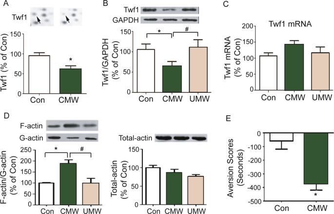 Alteration of twinfilin1 expression underlies opioid withdrawal-induced remodeling of actin cytoskeleton at synapses and formation of aversive memory